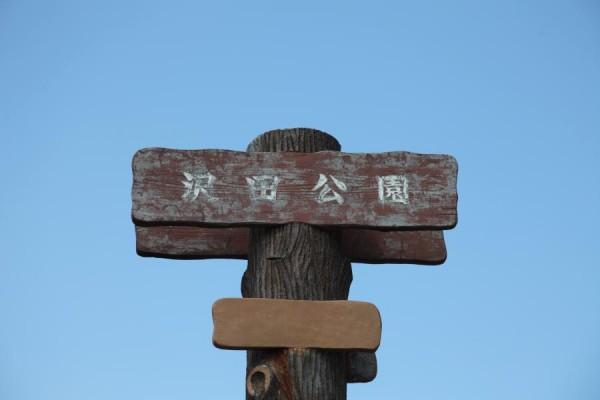 sawada006
