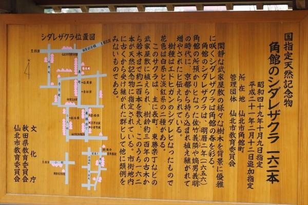 秋田県 角館 武家屋敷 枝垂桜