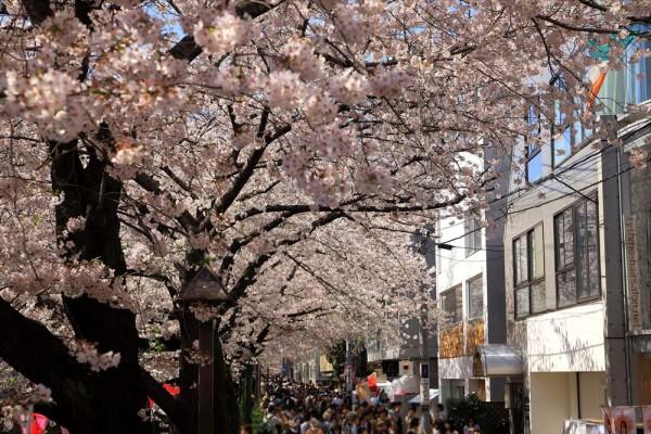 中目黒 桜並木